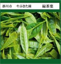 静岡県産 緑茶芳香蒸留水(3,500mL)